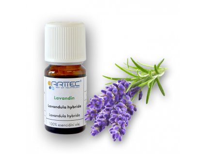 Lavandin super de Provence bio (Lavandula hybrida), Lavandula hybrida