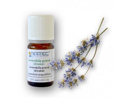 Levandule pravá (divoká) de Provence (Lavandula angustifolia)