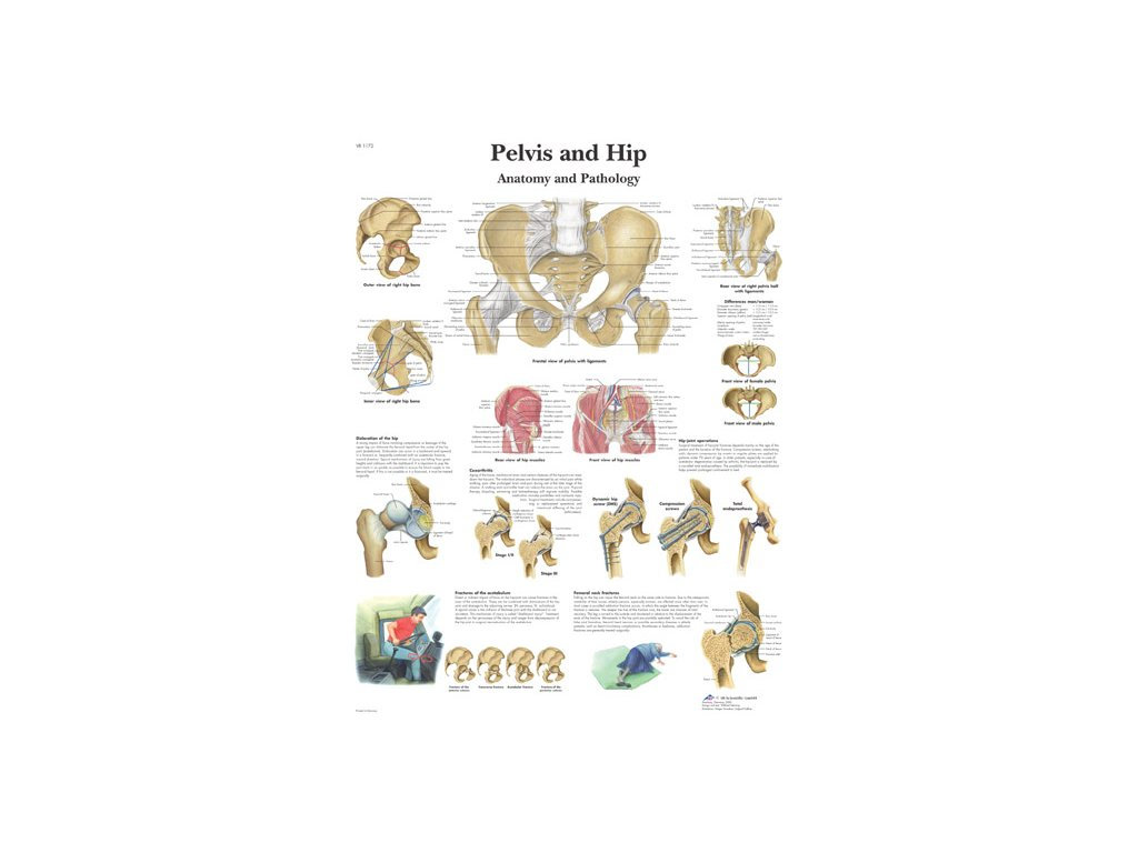 Výuková anatomie - pánev
