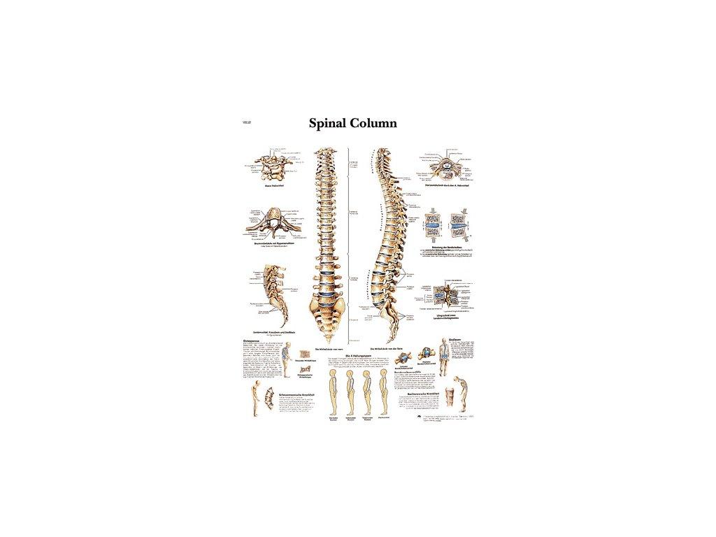 Výuková anatomie - páteř