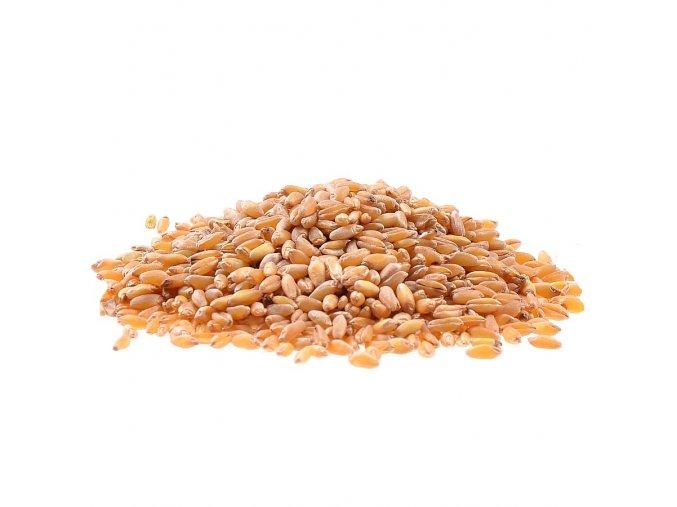 Tvrdá pšenice Bio 25 kg