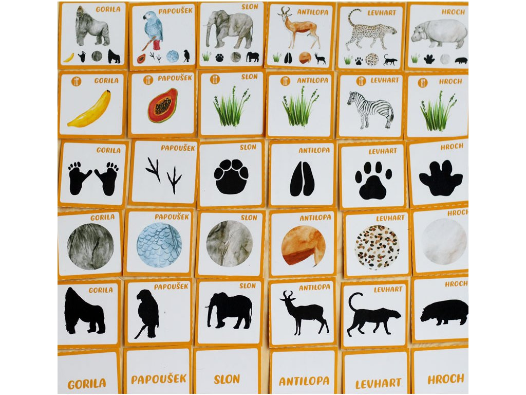 AFRIKA - 6 složkové karty