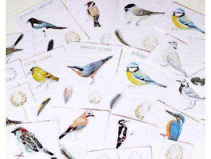 ptaci tisk 03