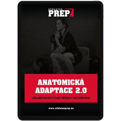 anatomicka adaptace
