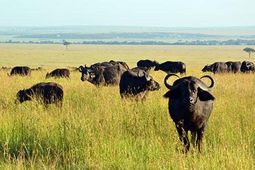 Pravé africké Safari