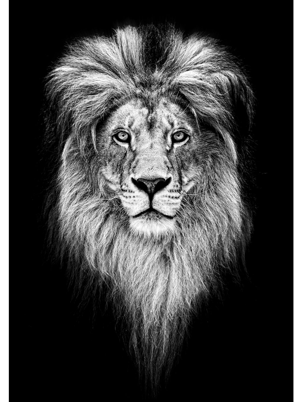 cernobily africky plakat king lion 01