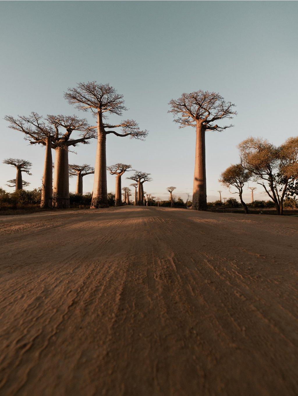 barevny africky plakat baobab 01