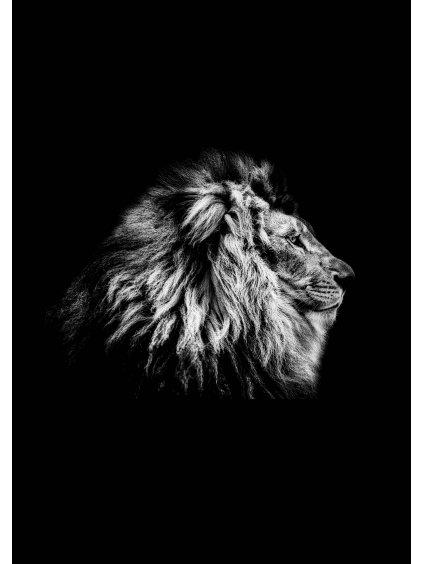 cernobily africky plakat lion 01