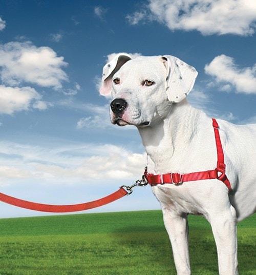 Postroj pro psy proti tahání EasyWalk Barva: červená, Velikost: XL