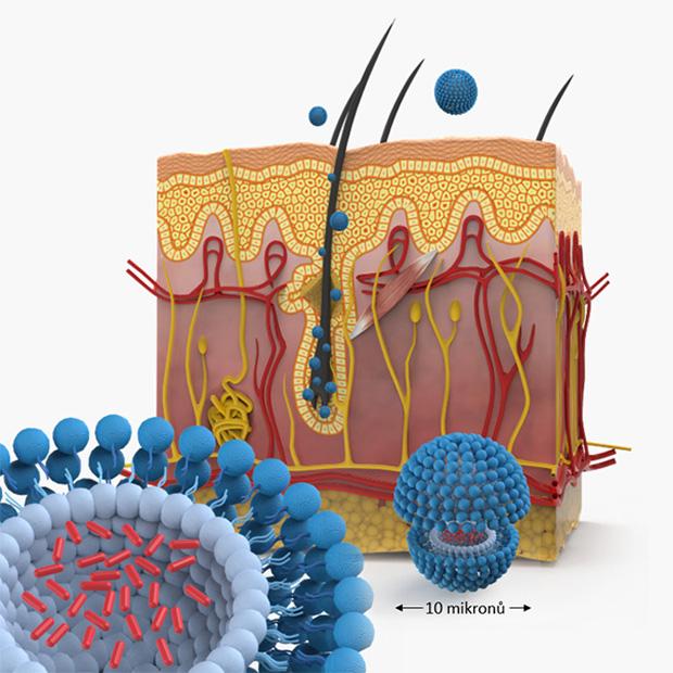 nanosoms2