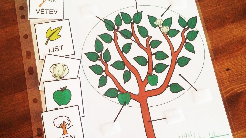 Přírodopis – části rostliny, stromu (strukturovaný úkol)