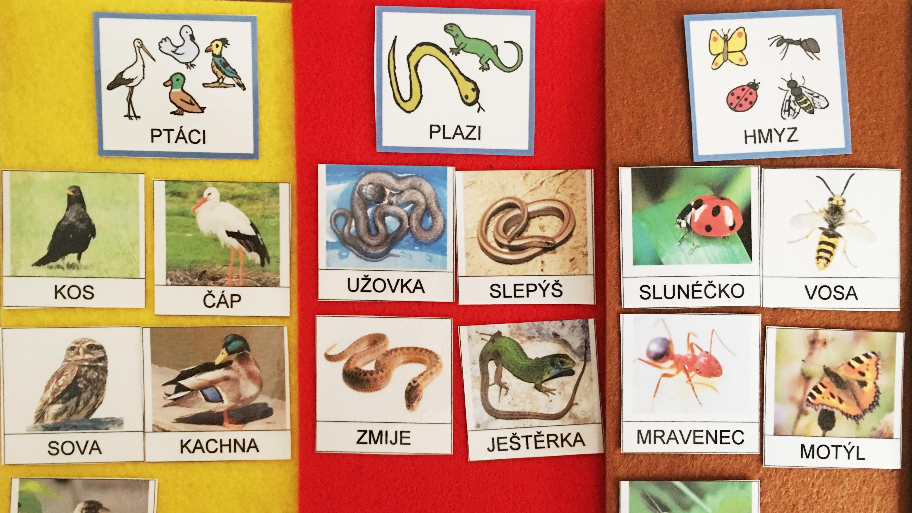 Obrázkové kartičky – přírodověda, třídění živočichů do skupin