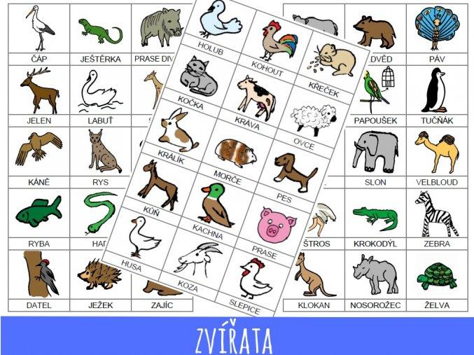 8. zvířata