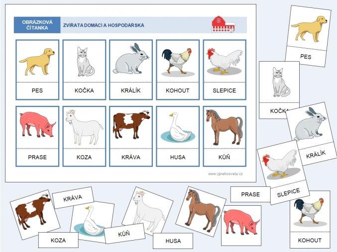 zvířata domácí barevna