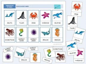 živočichové v moři barevná