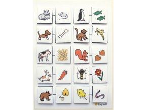 Zvířata: Čím se živí? Strukturovaný úkol