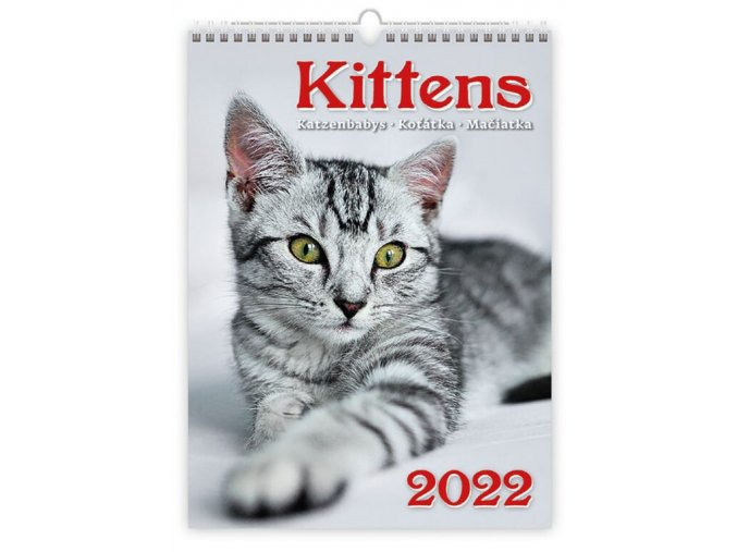 Kalendář Kittens/Katzenbabys/Koťátka/Mačičky