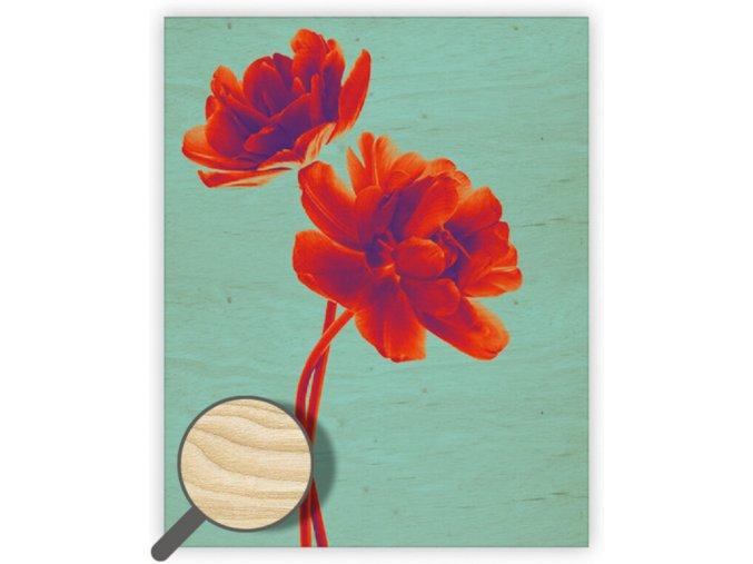 Dřevěný obraz Tulip