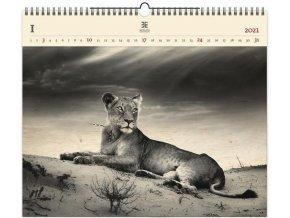 Luxusní dřevěný obrazový kalendář Lioness