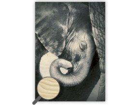 Dřevěný moderní obraz na stěnu se zvířaty Little Elephant (slon), černobílý obraz