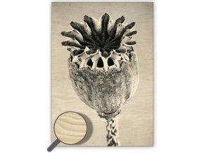 Dřevěný moderní obraz na stěnu Vlčí máky (Poppyhead), černobílý obraz