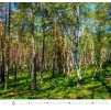 Kalendář Forest/Wald/Les