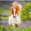 Kalendář Horses