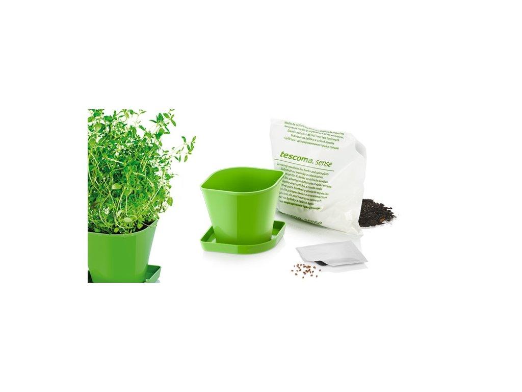Souprava pro pěstování bylinek SENSE, tymián
