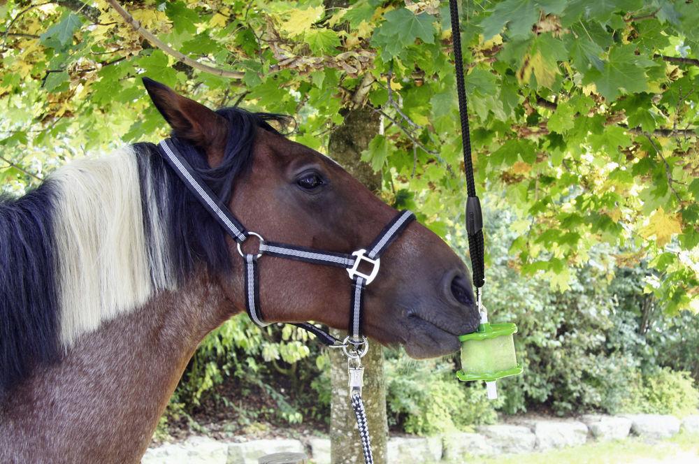 Liz pro koně DELIZIA, jablko