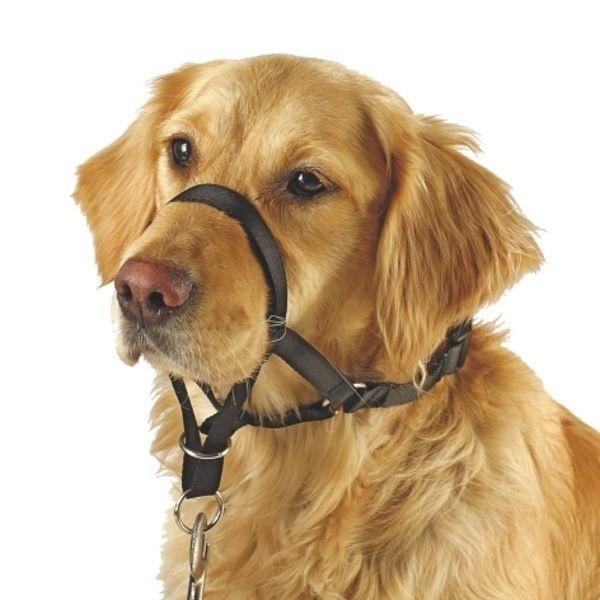 Ohlávka pro psy, halti proti tahání, vel. 6