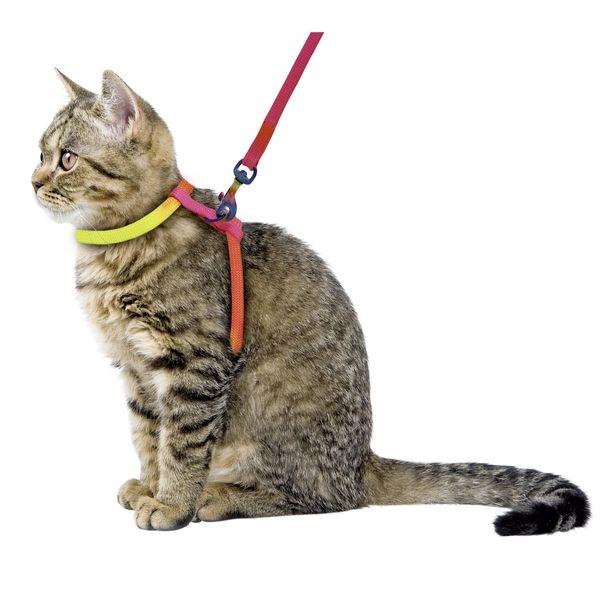 Postroj pro kočky Rainbow + vodítko
