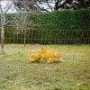 Síť vodivá pro drůbež, 112 cm, 50 m, 1 hrot, oranžová