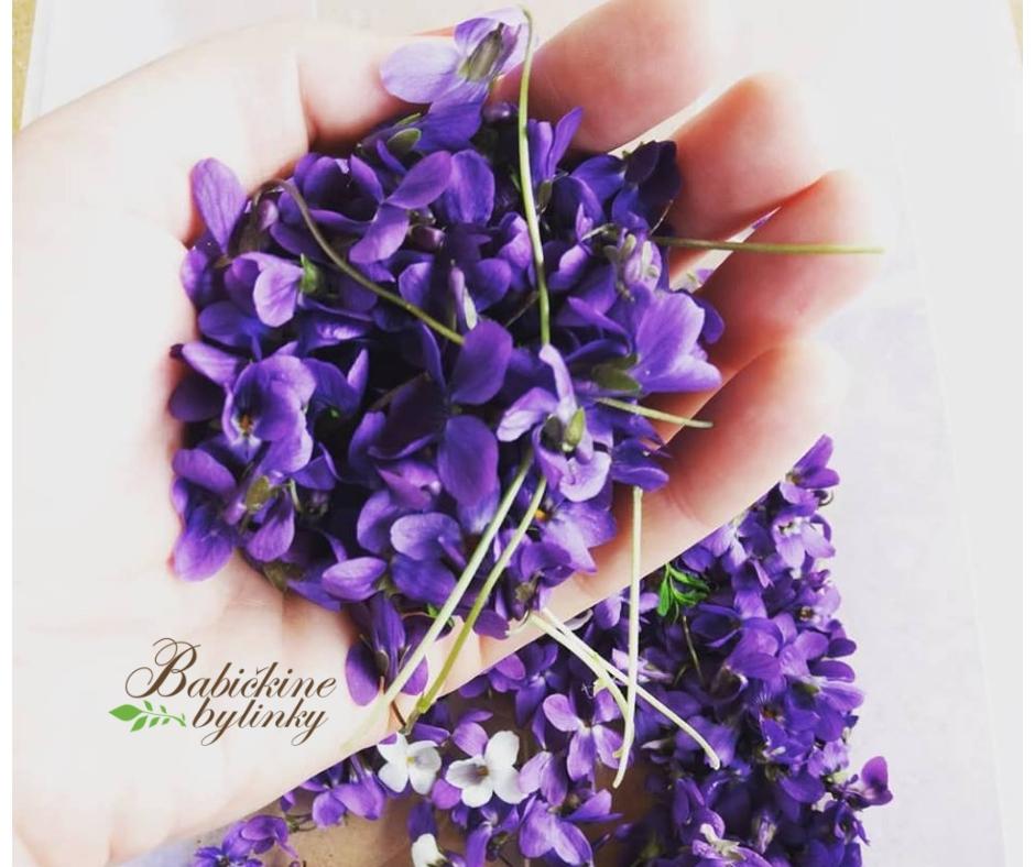 Fialka, viola, sirôtka - účinky a použitie