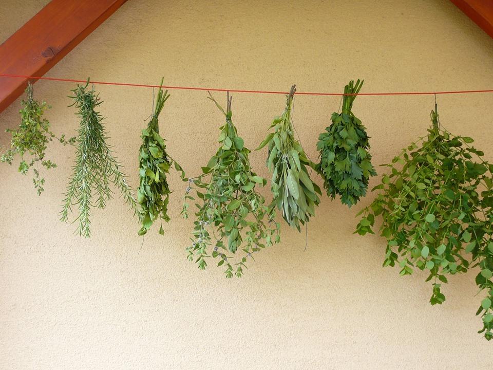 Ako spracovávať bylinky (Denník Sme)
