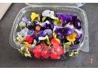 Kvety súčasť kuchyne (Denník Plus 1deň)