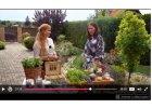 Hurá do záhrady - o bylinkách v črepníkoch