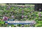 Jarné bylinky: Kde ich nazbierať a ako ich uskladniť?