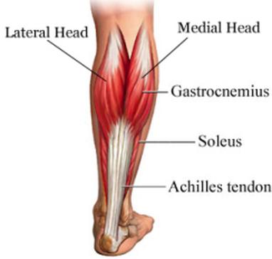 Bolestivé zranění v oblasti lýtka