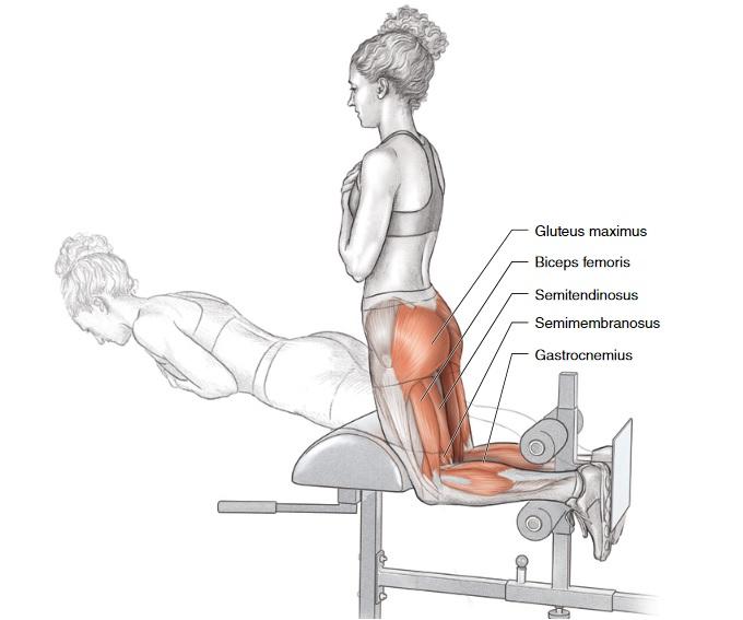 Cvik pro zlepšení běžeckého projevu - posílení velkého hýžďového svalu a hamstringů