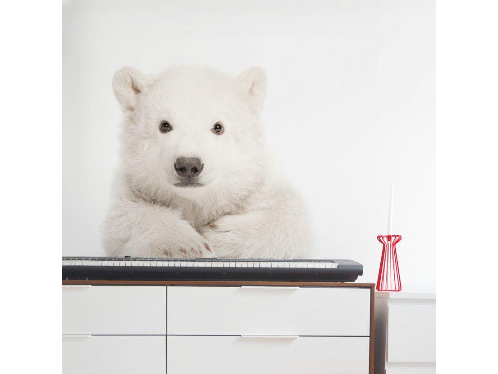 Samolepka na zed Ledni medved