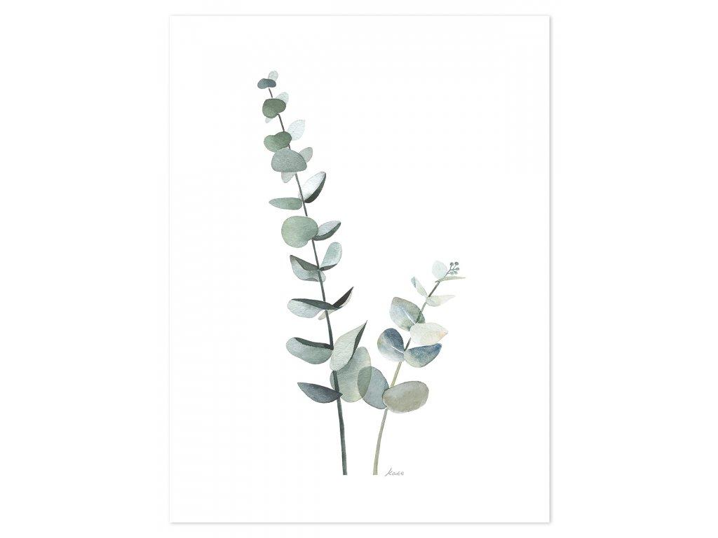 P0296 Eucalyptus