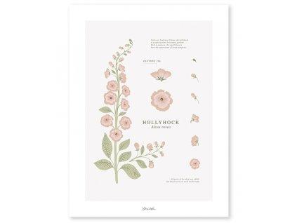 p0301 poster botanic fleurs hollyhock lilipinso