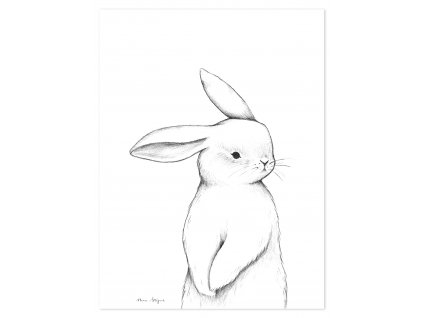 P0253 lapin face