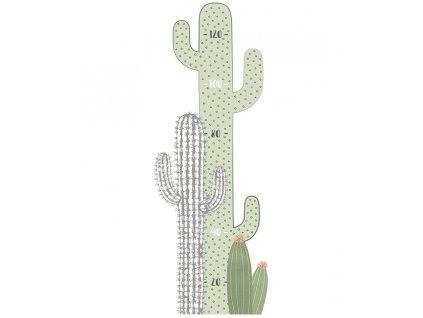 s1298 toi cactus (1)