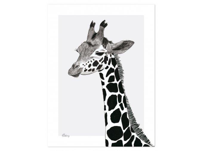 P0265 girafe