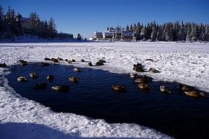 Známe neznáme jazero- ako uškodil človek Štrbskému Plesu?