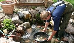 Ako naštartovať jazierko po zime