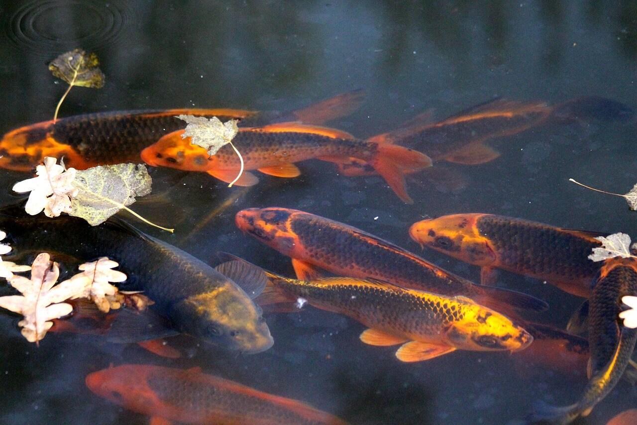 Ako zazimovať vaše jazierko