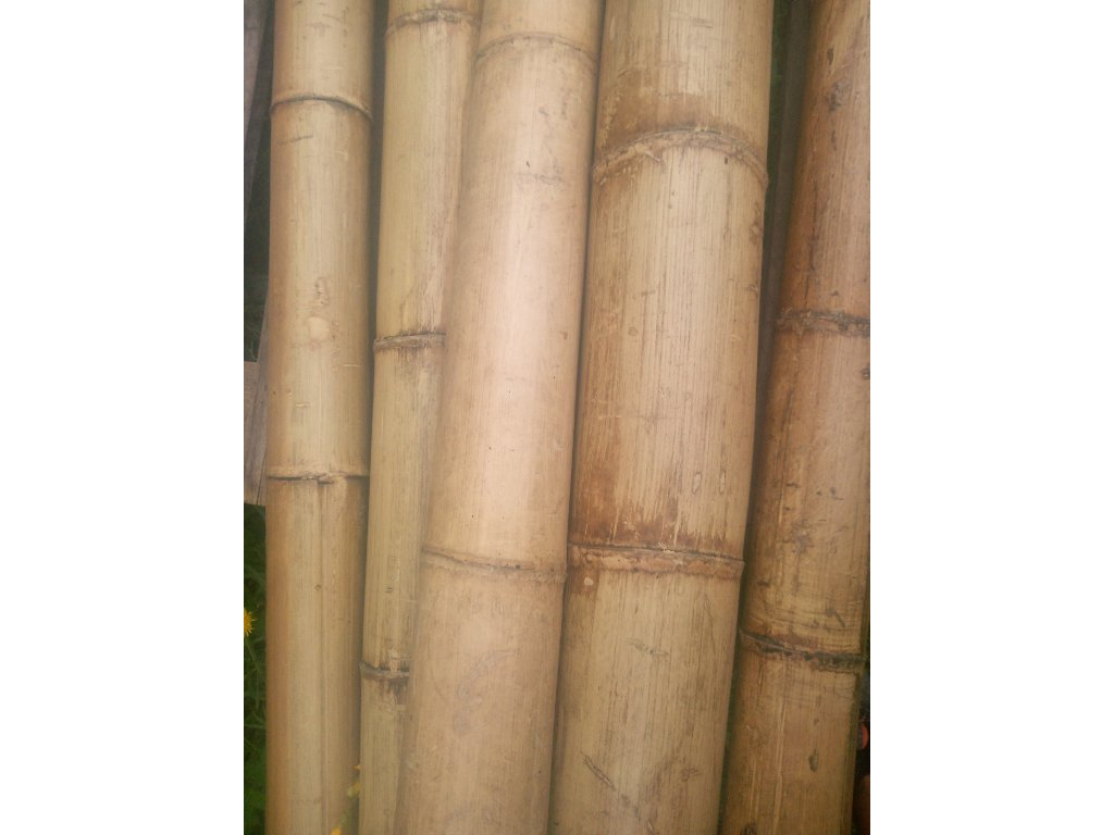 Bambusová tyč 60/80mmx400cm