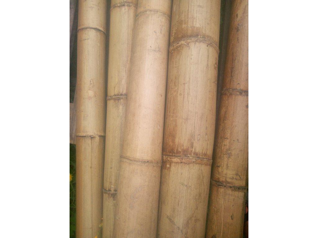 Bambusová tyč 80-100mmx400cm